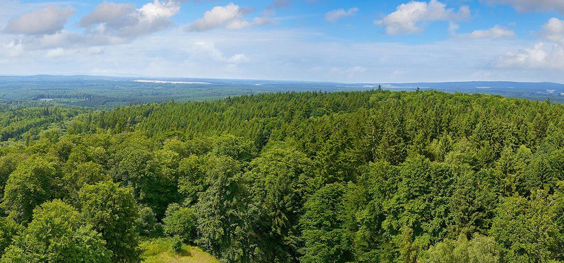 Forstunternehmen_Wald