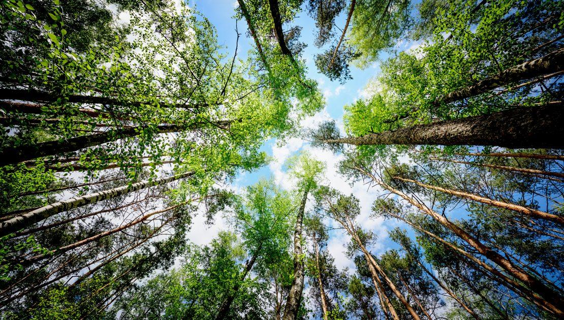 Wald_der_Zukunft_Falkenstein