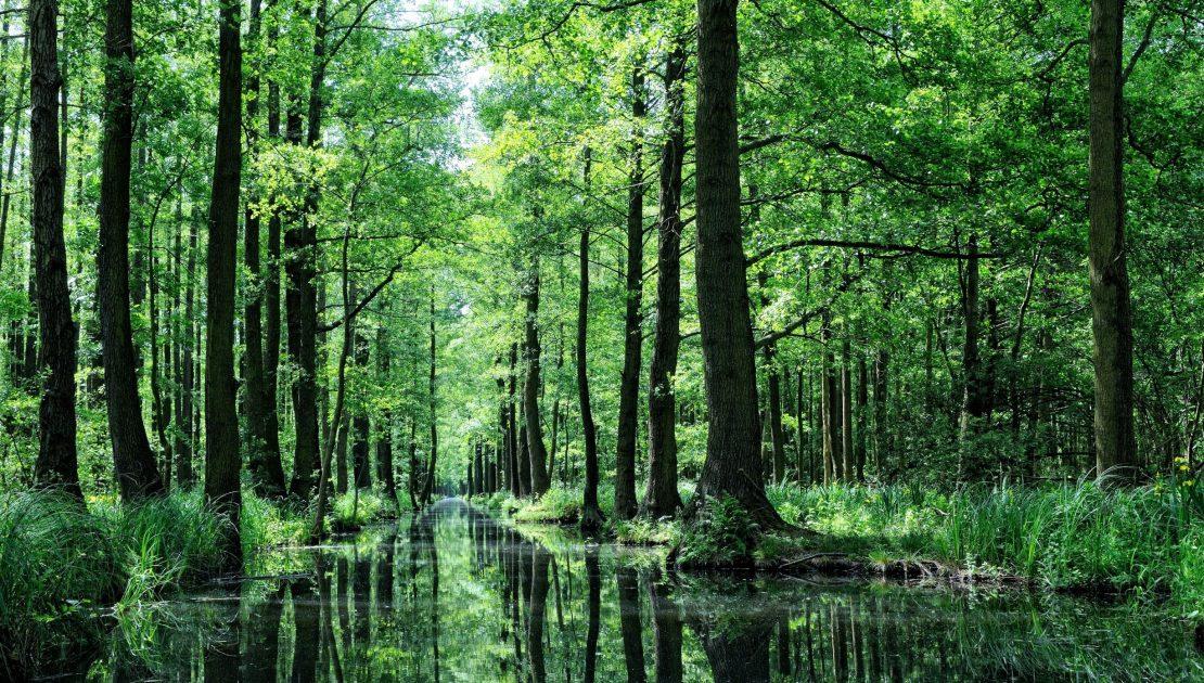 Spreewald_Wasser-und-Baumlandschaft Falkenstein Forstgut