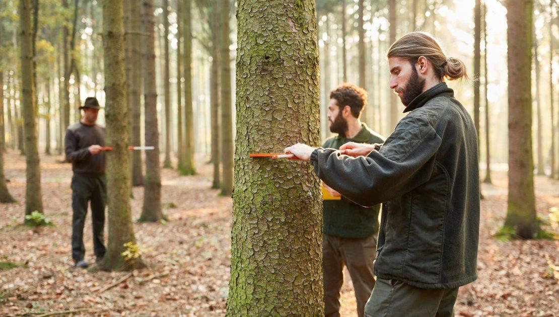 Waldarbeiter_Forstwirtschaft_Falkenstein