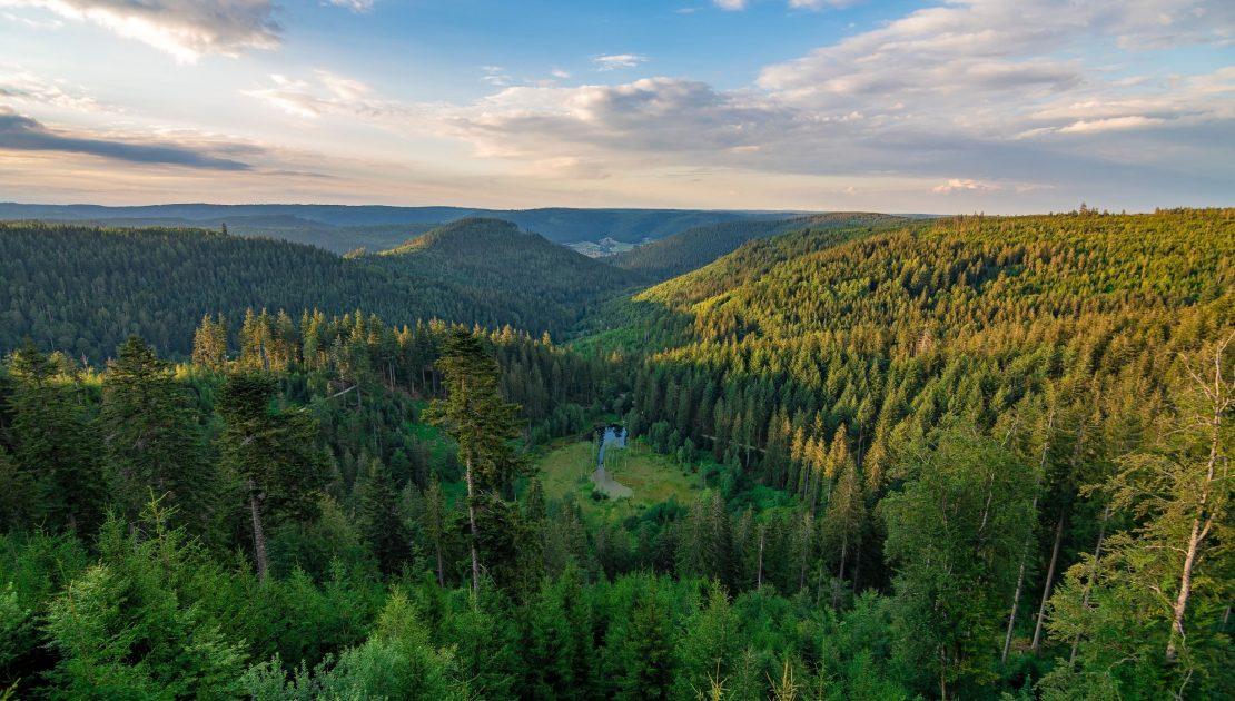Falkenstein Forst Aufforstung, Ökopunkte Forstwirtschaft