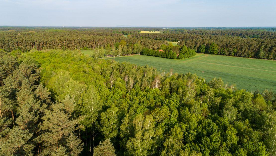 Waldfläche_Falkenstein_Vogelperspektive